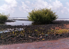 Tide approaches Red Road, then with old red pavement
